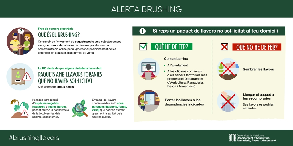 Infografia Brushing pdf